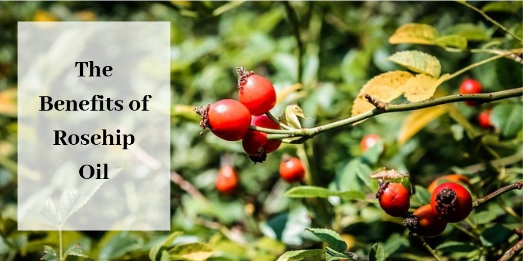The Benefits Of Rosehip Oil For The Skin - Rosehips